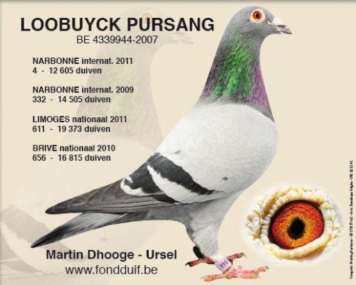 loobuyck-pursang-2