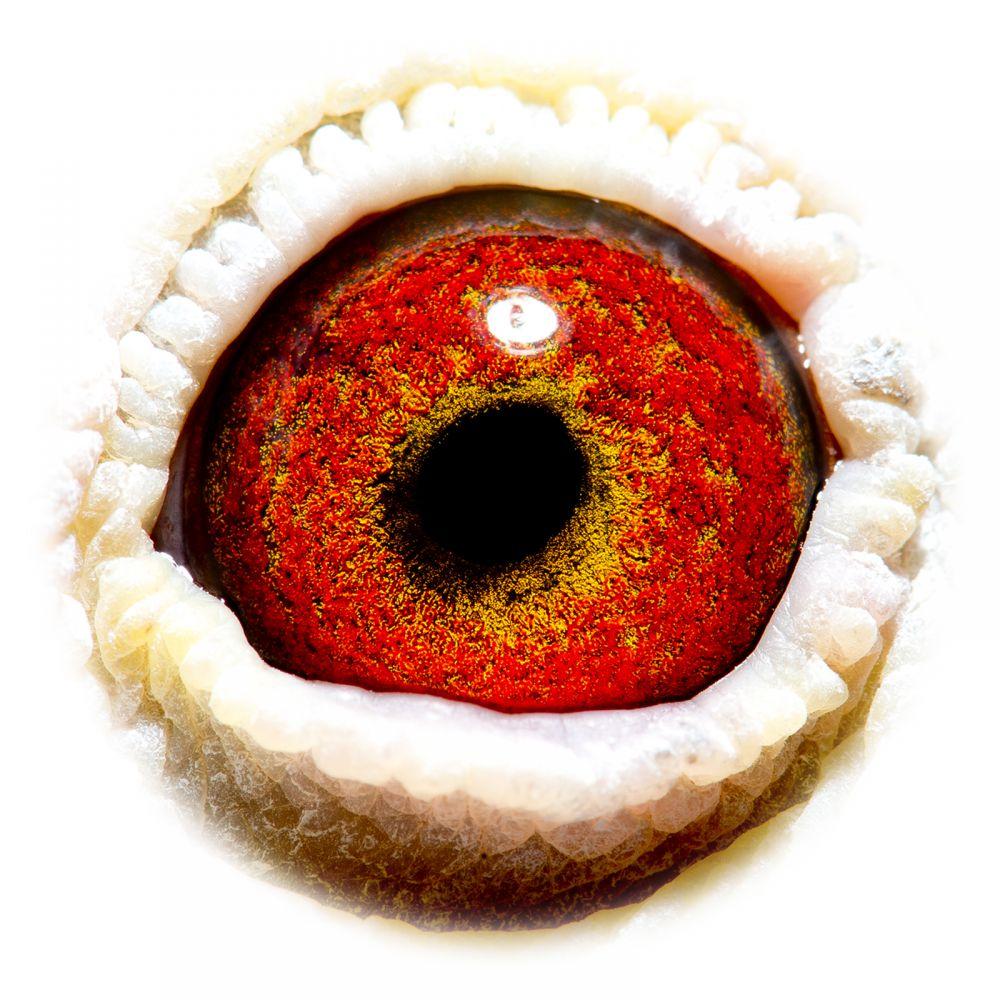 BE12-4153467_eye