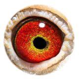 BE14-eye 064-14