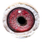 BE09-4101722_eye