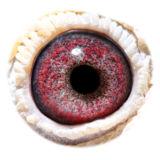 BE04-3160649_eye