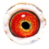 BE05-4071032_eye