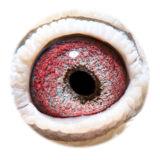 BE06-4062052_eye