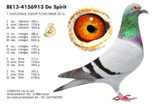 Asduif Spirit