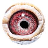 BE09-4101742_eye