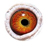 BE10-4173127_eye