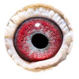 BE10-4173130_eye