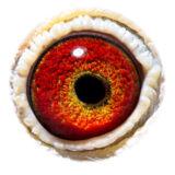 BE11-4078062_eye