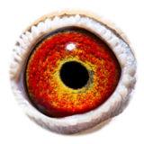 BE11-4078087_eye