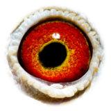 BE11-4078088_eye