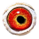 BE12-4153426_eye