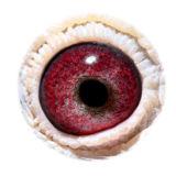 BE12-4153468_eye