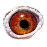 BE12-4305861_eye