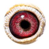 BE12-4305862_eye
