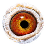 BE12-4305896_eye