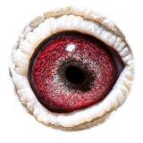 BE13-4156902_eye