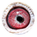 BE13-4156948_eye