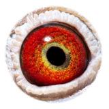 BE13-4156976_eye