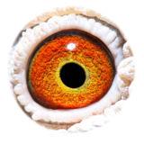 BE13-4158410_eye