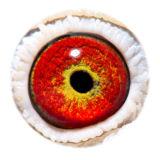 BE14-4198013_eye