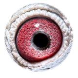 BE15-4008305_eye