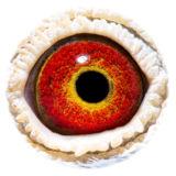 BE15-4008360_eye