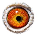 BE15-4008361_eye