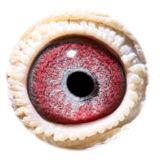 BE15-4008379_eye