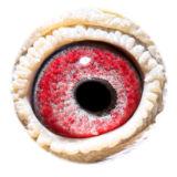 BE15-4256530_eye