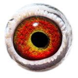 BE15-4270493_eye