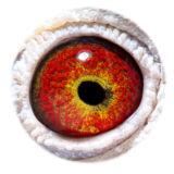 BE16-4118470_eye