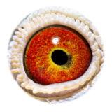 BE16-4118472_eye