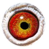 BE16-4118553_eye