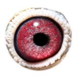 BE16-4127439_eye