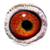 BE16-4127440_eye