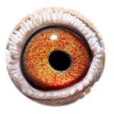 BE16-4127477_eye