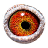 FR16-181195_eye