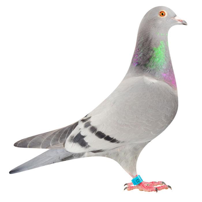 NL16-1872623