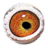 NL16-1872623_eye