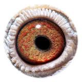 NL16-1872626_eye