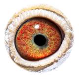 NL16-1872628_eye