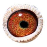 NL16-1872629_eye