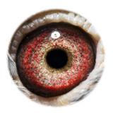 BE09-4101745_eye