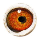 BE14-3064679_eye