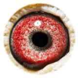 BE14-4198006_eye
