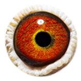 BE15-4008321_eye
