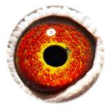 BE15-4008368_eye