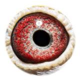 BE15-4256524_eye