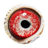 BE16-4118564_eye