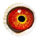 BE17-4058300_eye